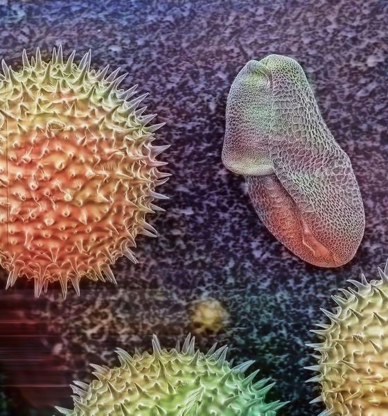 Polline microscopio elettronico